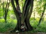 Hug The Trees People
