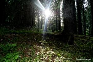 The Enlighten Forest