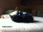 Baby Cats - Jah & Kaya