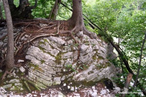 Rooted Stone