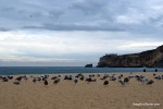 Birds Of Nazare, Portugal