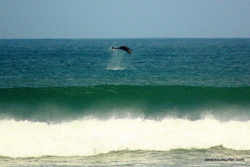 Dolphins On Baleal Beach, Peniche, Portugal, 21.10.2012