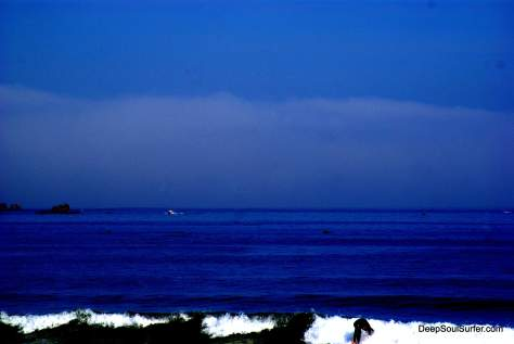 Surfs With Dolphins, Baleal Beach Portugal